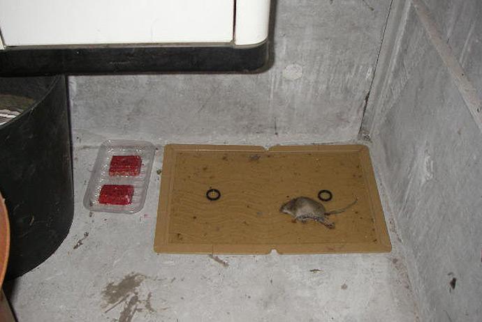 ネズミ対策